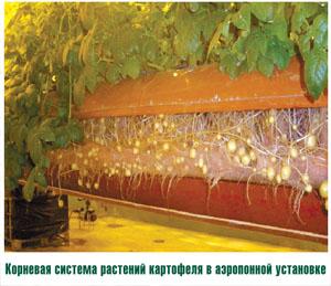 Картофель выращивание методом гидропоники 12